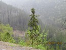 незаконный лесорубочный перевал