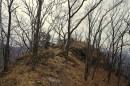 Скала посреди леса.