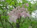 Весенний Витязь