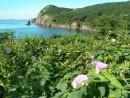 Южная бухта острова Сибирякова.