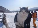 Местный котяра. Конеферма. Подножье горы Дунькин Пуп. Партизанский район.