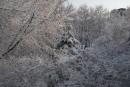 Деревья в снегу. Покровский парк.