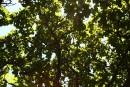 солнечная зелень