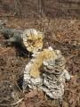 грибы проели сухое дерево