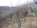 южный склон более пологий и зарос черными пока еще лиственичными