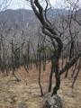 сосенки оживляют пейзаж
