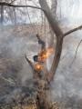 трухлявые деревья долго еще тлеют и вспыхивают