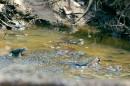 У лягушек пора размножаться и нести икру.  Дорога вдоль просеки ЛЭП, между хребтами Богатая грива (Океанский) и Береговой (Тимпур).