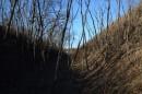 А в прогалинах растут высокие стволы аралии маньчжурской (чёртова куста).