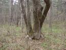 22.Необычное дерево. Как его назвать?