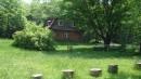 11.Дуб летом 9.06.2010 год.