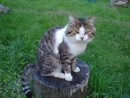 "05.Наш кот ""Барсик""."