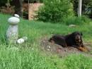 24.Наша собака Грей.