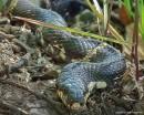 Взгляд змеи.  Заросли вокруг бухты могут преподнести интересные сюрпризы.