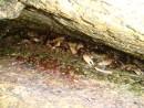 крабы между камней Андреевка, бухта водолазка
