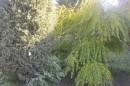 Ботанический сад, Окрестности парка (табличка - можжевельник твёрдый)