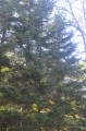 Ботанический сад, Окрестности парка, ели.