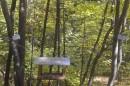 Ботанический сад, лесополоса. Кормушка для птиц и грызунов.