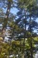 Ботанический сад, лесополоса