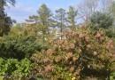 Ботанический сад, окрестности парка