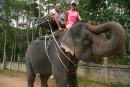 Слон-он такой красивый...