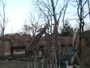 "Сафари в парке ""Everland"""