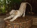 Бенгальский тигр - красавец!