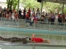 Шоу крокодилов - смелый таец