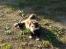 10.Кошечка.