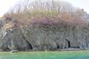 Багульником был покрыт весь берег, но красивее всего - в районе Бакланьих.