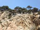 Конечно же, сосны (могильные, или густоцветковые), растущие на скалистых берегах, эта визитная карточка Гамовского полуострова, делают пейзаж уникальным и неповторимым.