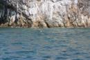 Возле кекуров есть лежбище тюленей ларга, летом их собирается до нескольких десятков. Сейчас не сезон, но парочку мы видели :)