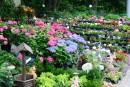 Магазинчик рядом с Ботаническим садом