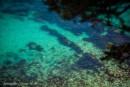 изумрудная вода в малодоступной бухте с shamora.info