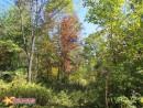 В багрянец и золото одетые леса