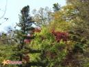 Осенне разноцветье