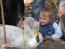 Красавец лебедь