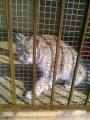 Мини-зоопарк в с. Борисовка возле Уссурийска