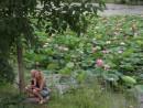 Лотосы расцветают как раз в первую неделю августа, за неделю до фестиваля и очередной годовщины японо-советского конфликта у озера Хасан.