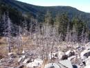 Мертвый лес. Подъем по ребру к вершине вдоль сухого леса.