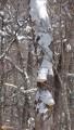 10.Зимние грибы. И в зимнем лесу можно собирать грибы.