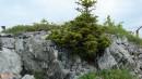 05.И на камнях растут деревья.