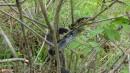 06.Красивая змейка. Красавец Амурский полоз, встретили перед вершиной. Почти ручной.