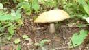 24.Грибы. И на высоте 1400 м на склонах г.Снежной растут грибы.