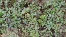 10.Голубика на плато.