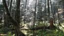 02.По тропе на вершину. После дождя в лесу на пути по хребту к вершине г.Лысая.