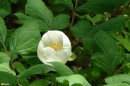 26.Лесной цветок.