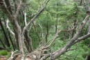 10.Упавшее дерево.