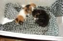 02.Котята. Такими котята были в начале мая.