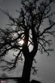 07.Сухое дерево.